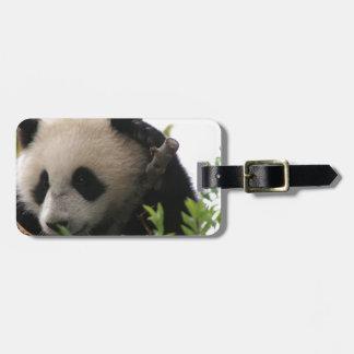 Su Lin, reuzepanda draagt welp bij de Dierentuin v Kofferlabel
