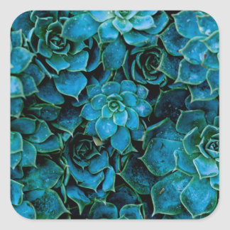 Succulent Plant Vierkante Sticker