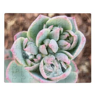 Succulent verbazen