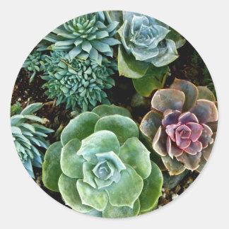 Succulente Liefde Ronde Sticker