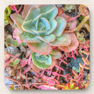 Succulents Onderzetter