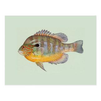 Sunfish door Duane Raver Briefkaart
