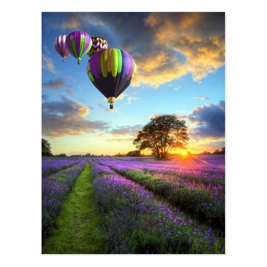 Sunrise and hot air balloons above lavender field briefkaart
