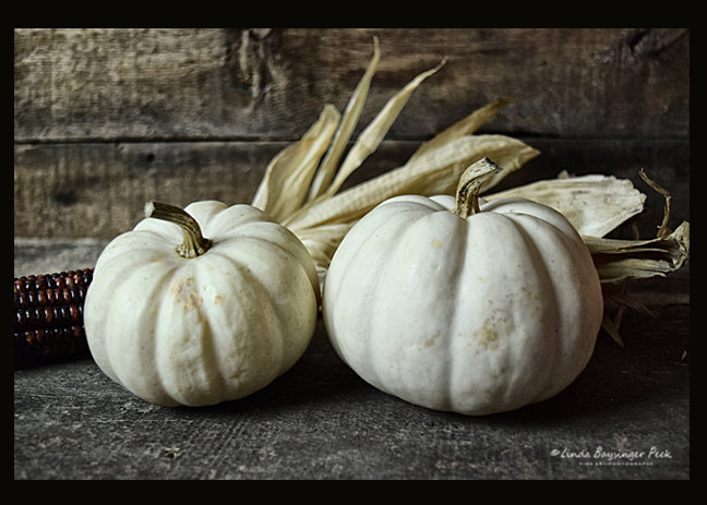 Two White Pumpkins With Corn