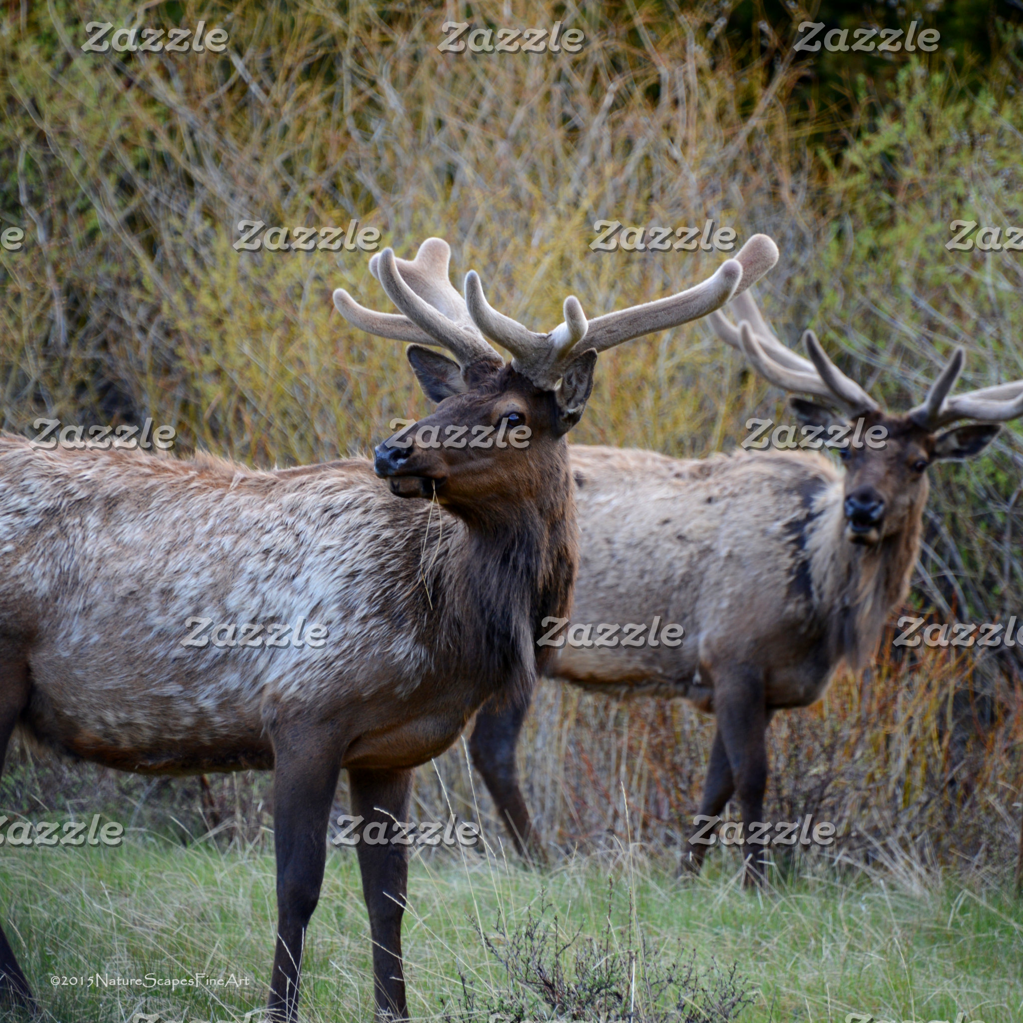 Elk Hunter Party Collection