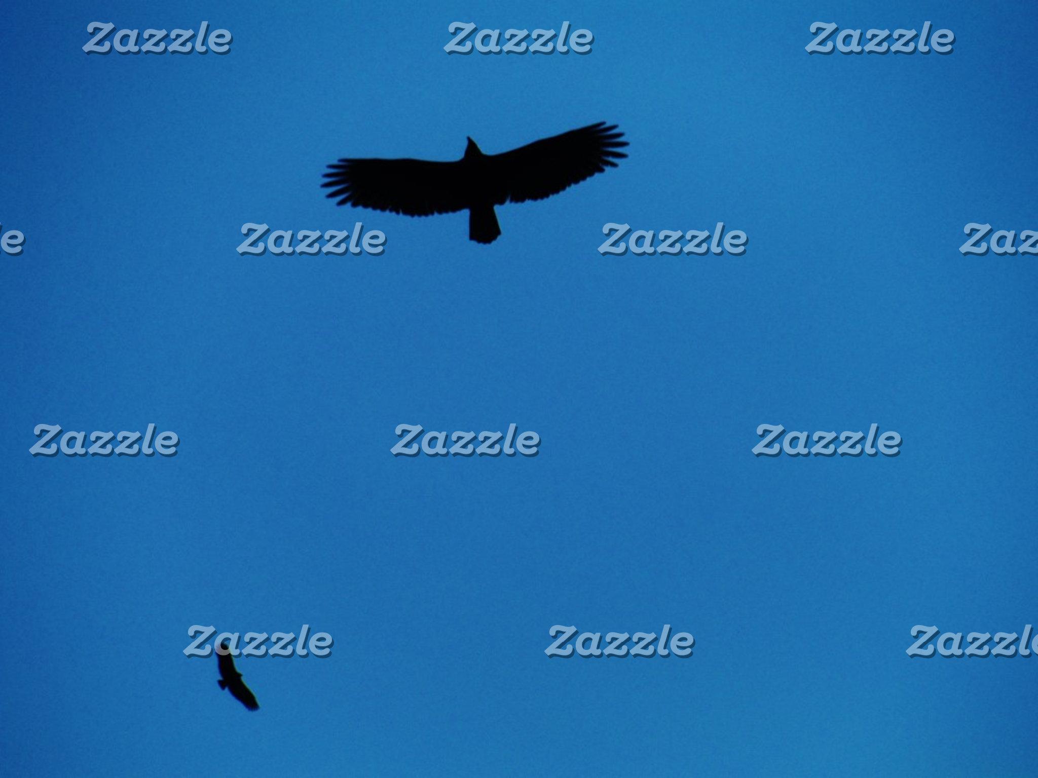 Black bird in a Blue Sky