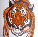 Draw a Pet