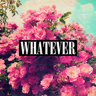Whatever Pink Roses