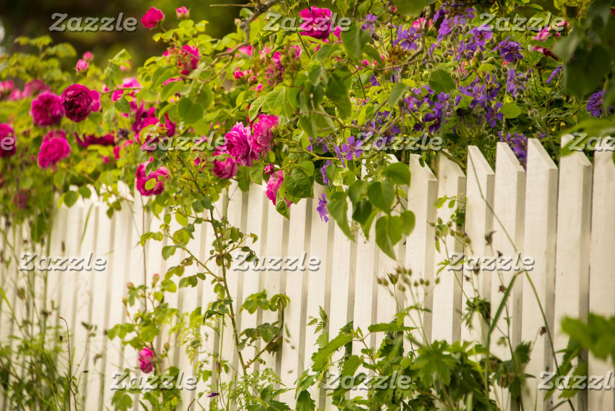 Roses over white fence