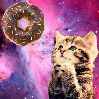 Donut Praying Cat