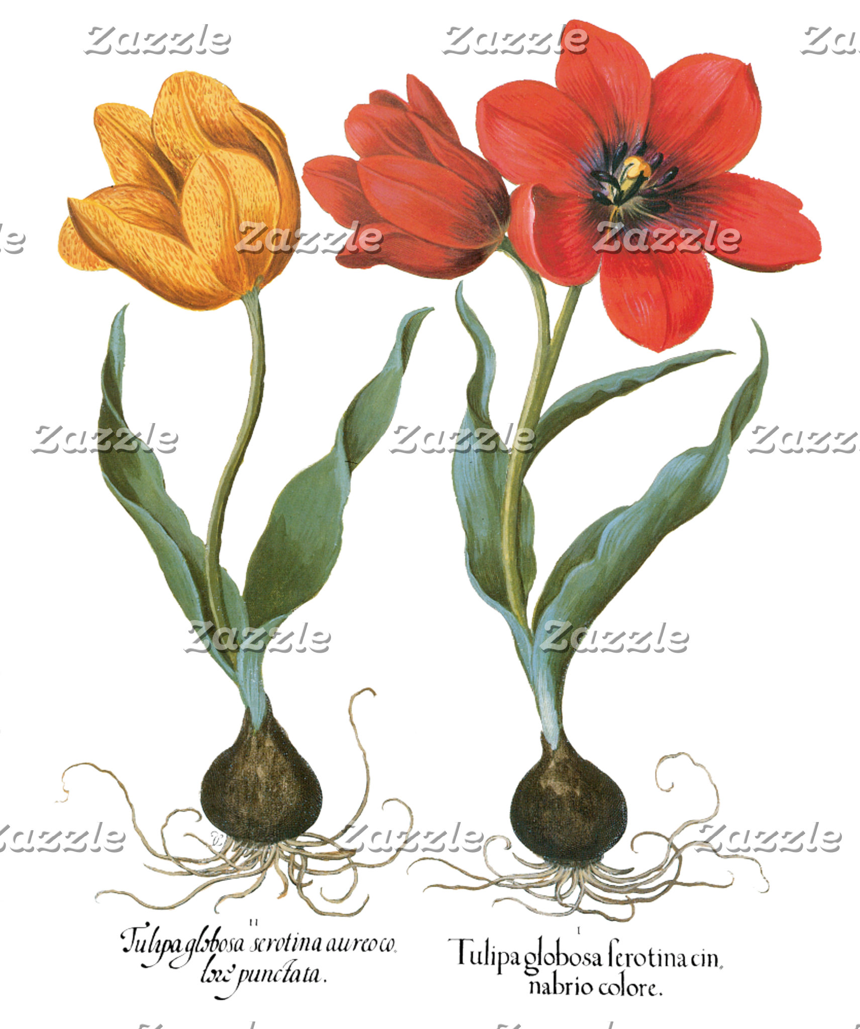 Botanical Art, Flowers and Garden Scenes Gifts