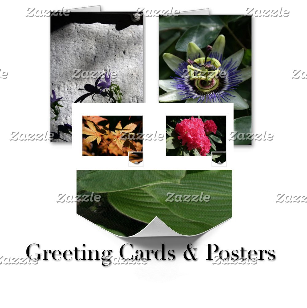 03 - Color Floral Photography