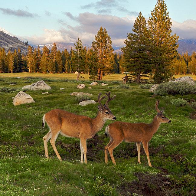 Tuolumne Meadow, Yosemite
