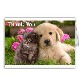 Greeting Cards / Note Cards
