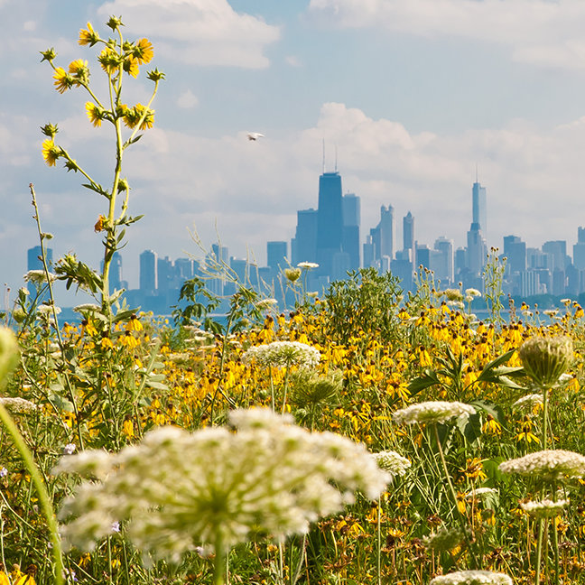 Chicago as seen from Montrose Harbor's bird