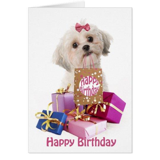 Sweet birthday card dog Maltese and presents Briefkaarten 0