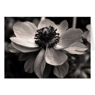 Sympathie van de Fotografie van de anemoon dankt Kaart