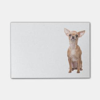 Tan van Chihuahua & de Witte Post-it van de Hond Post-it® Notes