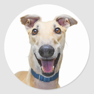 Tan van de windhond en de Witte Hond van het Puppy Ronde Sticker