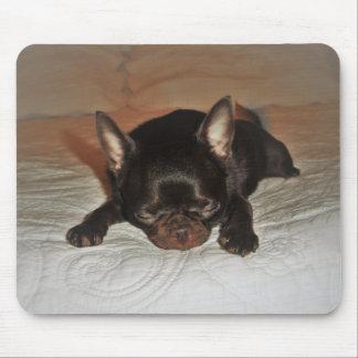tapijt foto vaag jonge hond liggende muismat