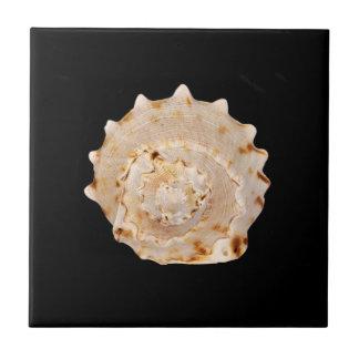 Tegel van de Foto van Shell van de kroonslak de Keramisch Tegeltje