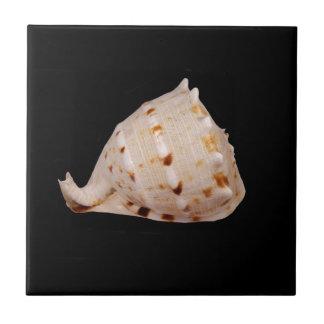 Tegel van de Foto van Shell van de kroonslak de Tegeltje Vierkant Small