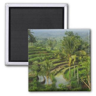 Terras Ricefield in Bali Koelkast Magneet