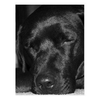 Tevreden, slaap zwart Labrador Briefkaart