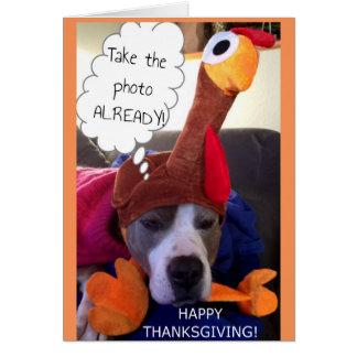 Thanksgiving - Pathetische Pittie Briefkaarten 0