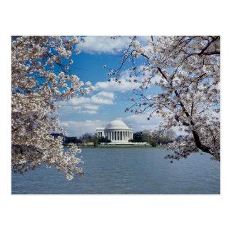 Thomas Jefferson Memorial met de Bloesems van de Briefkaart