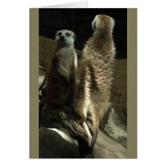 Tijd omhoog te maken! Meerkats Wenskaart