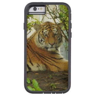 Tijger in het Bos Tough Xtreme iPhone 6 Hoesje