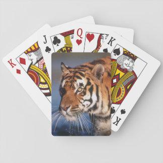 Tijger van India, Bengalen (Panthera Tigris) 2 Pokerkaarten