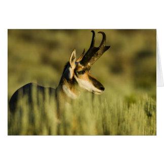 Toevluchtsoord van de Antilope van de Berg van het Kaart