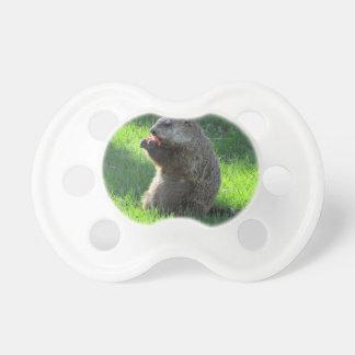 Tomaat Groundhog Fopspenen