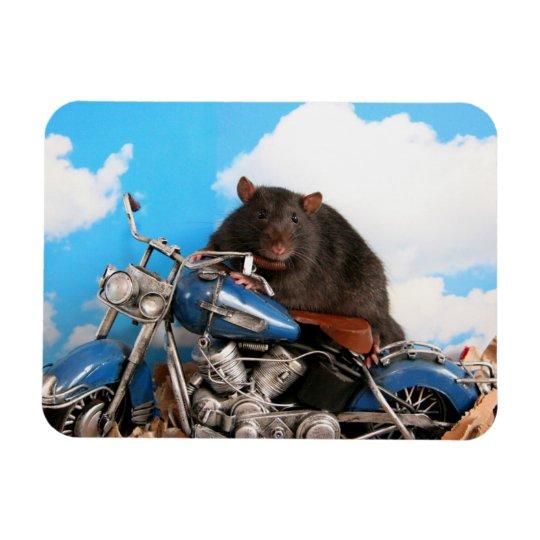Tough Rattie On Motorbike Magneet