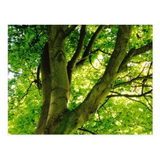Treee Briefkaart