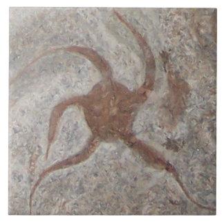 Treeft van de Tegel van de zeester de Fossiele Keramisch Tegeltje