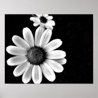 trillende macro zwart-witte fotografie bloemen poster