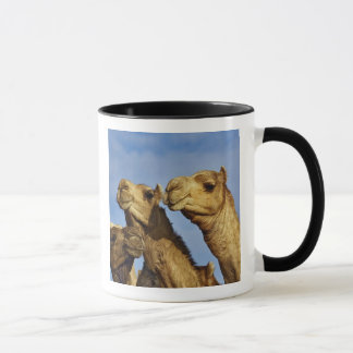 Trio van kamelen, kameelmarkt, Kaïro, Egypte Mok