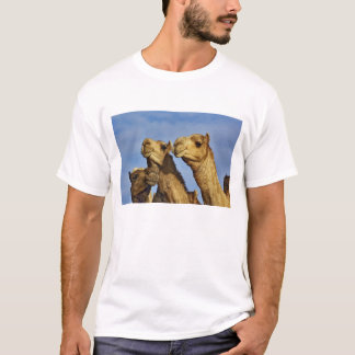 Trio van kamelen, kameelmarkt, Kaïro, Egypte T Shirt