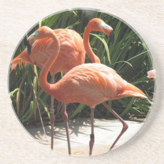 Troep van het Onderzetter van Flamingo's