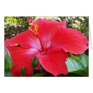 Tropische bloemenkaart kaart