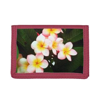 Tropische Exotische Bloem Frangipani