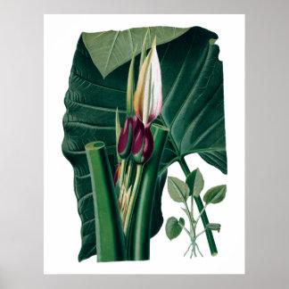 Tropische grote bladeren botanische druk poster