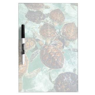 Tropische Schildpadden (de Fotografie van Kimberly Whiteboard