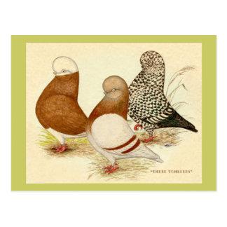 Tuimelschakelaars Drie Briefkaart