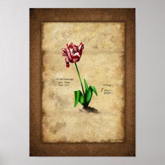 Tulip (Semper Augustus) Poster