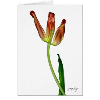 """Tulp"" door J. Maya Luz Kaart"