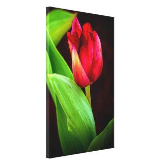 Tulp in het Licht wordt gevangen dat Canvas Afdruk